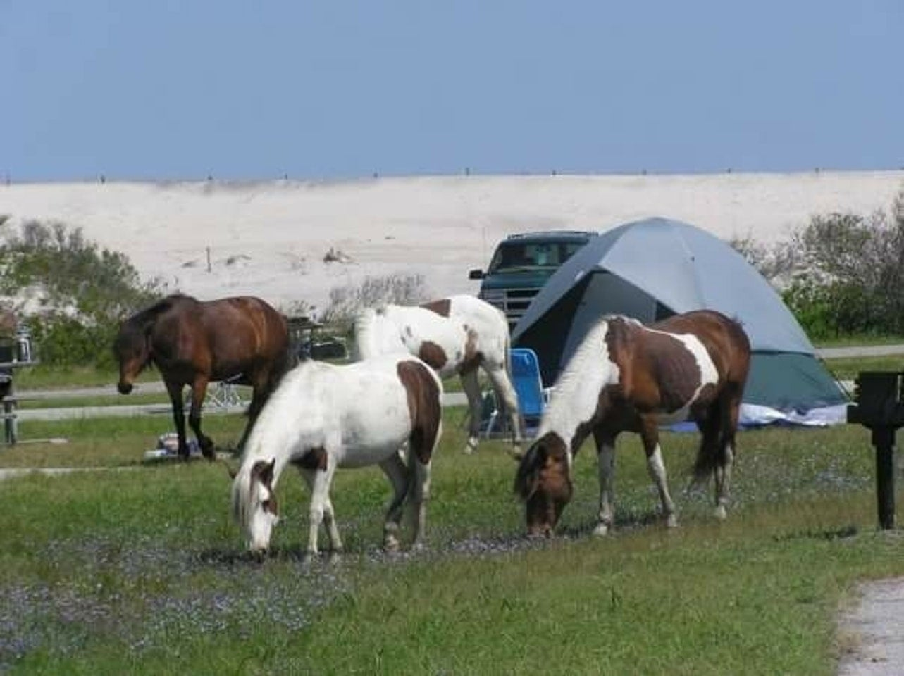 assateague island campgrounds in the northeast