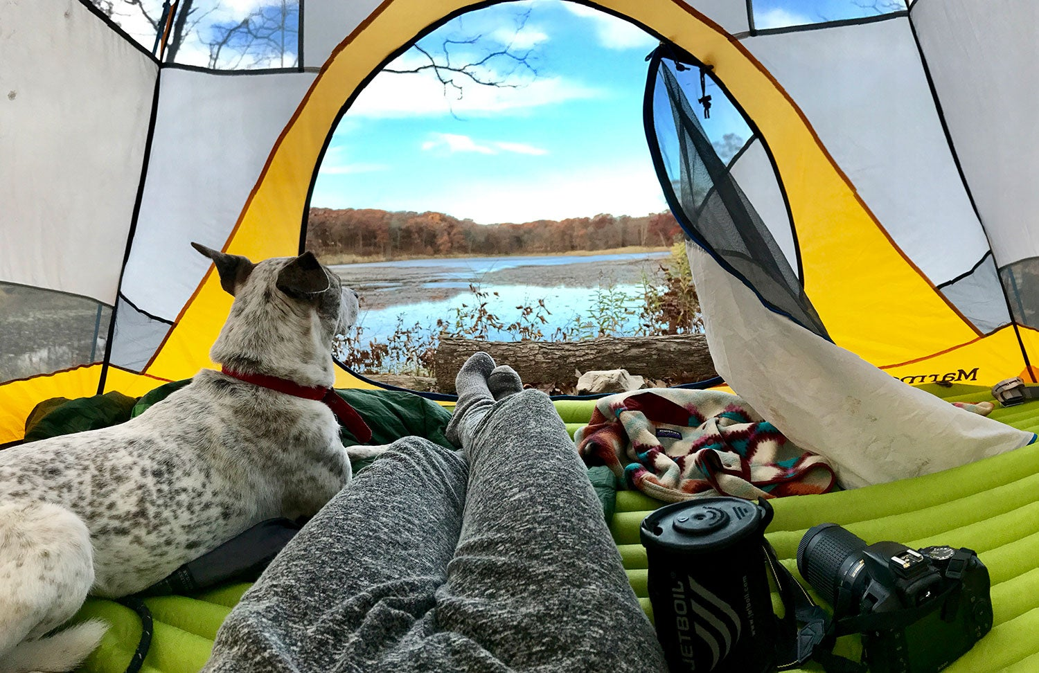 Person laying down in a tent next to their dog