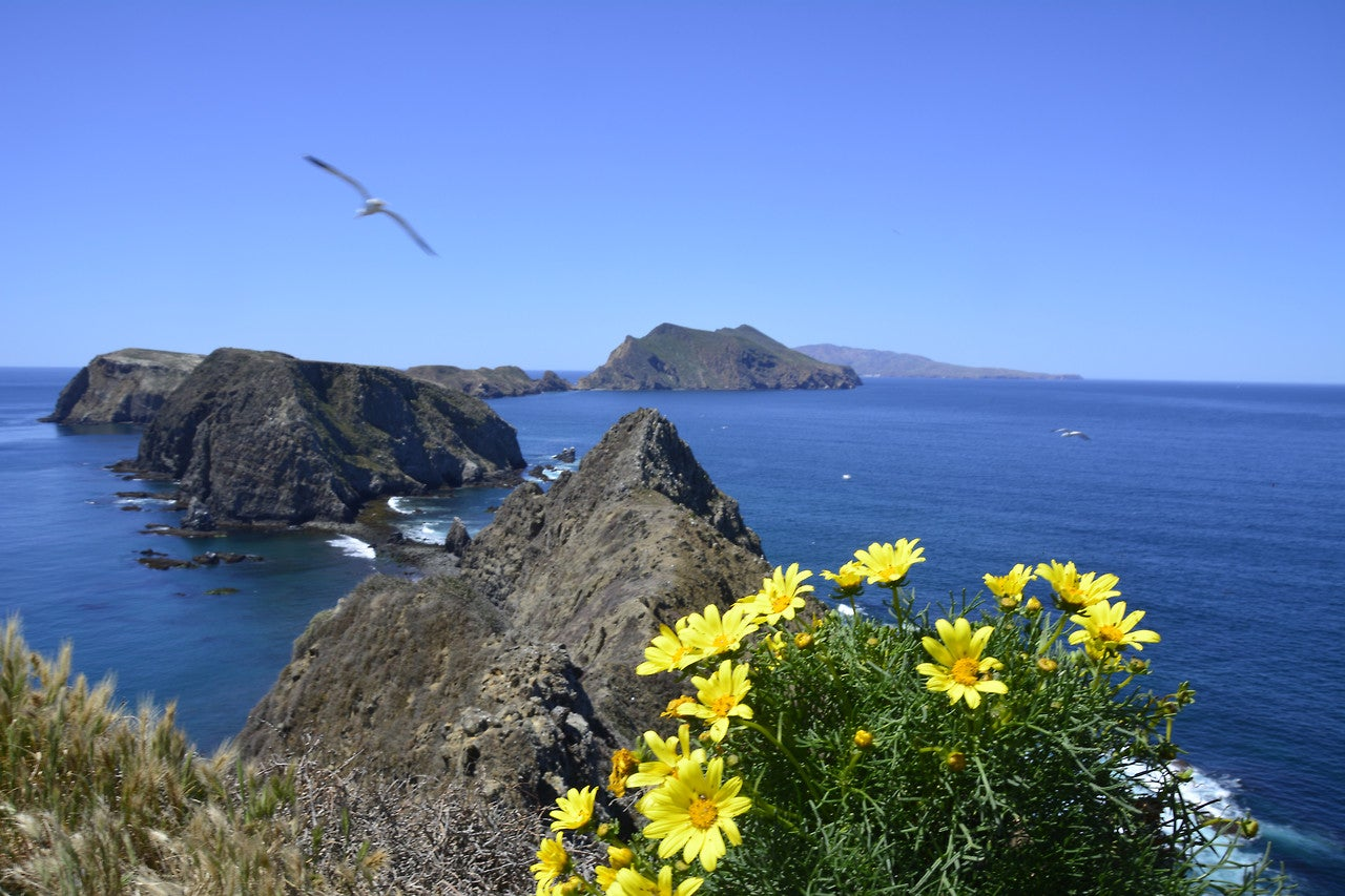 here's where to camp in channel islands national park