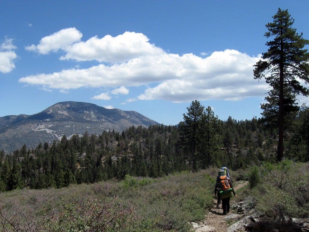 San Gorgonio South Fork Trail