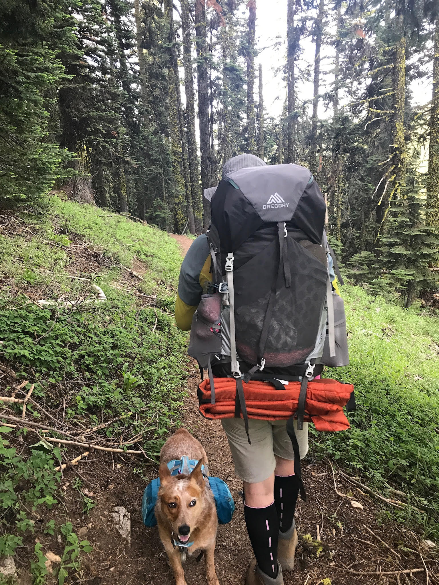 Backpacker wiht Gregory pack and dog on the trail.