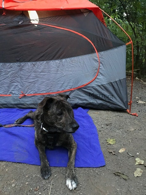 Camping with dogs in keenig creek