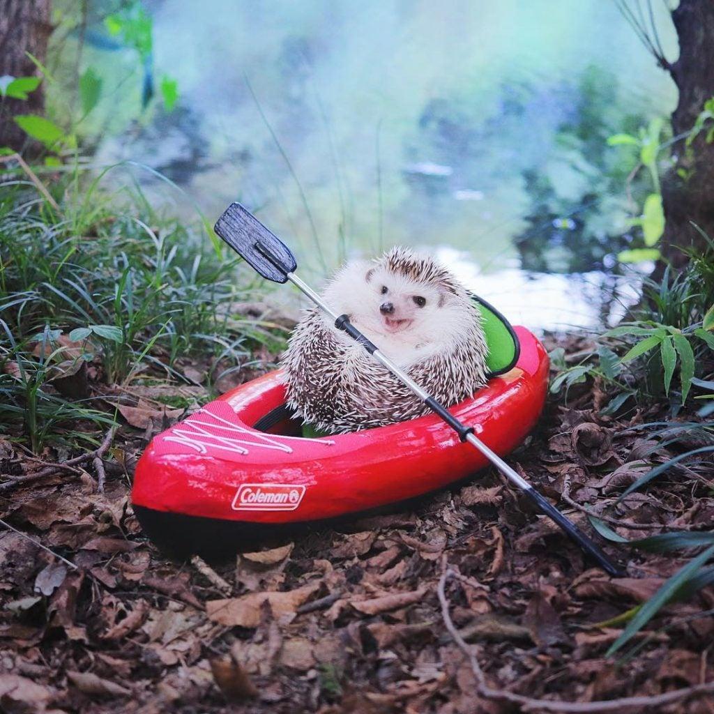 hedgehog camping stories