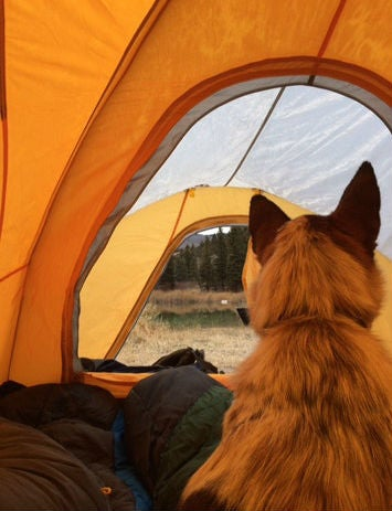 Camping with dogs in castle peak