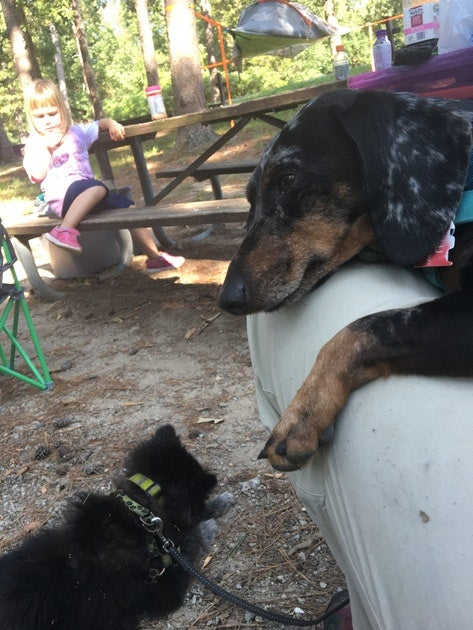 Camping with dogs in Crowleys