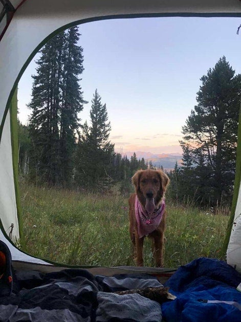 Camping with dogs in halfmoon campground
