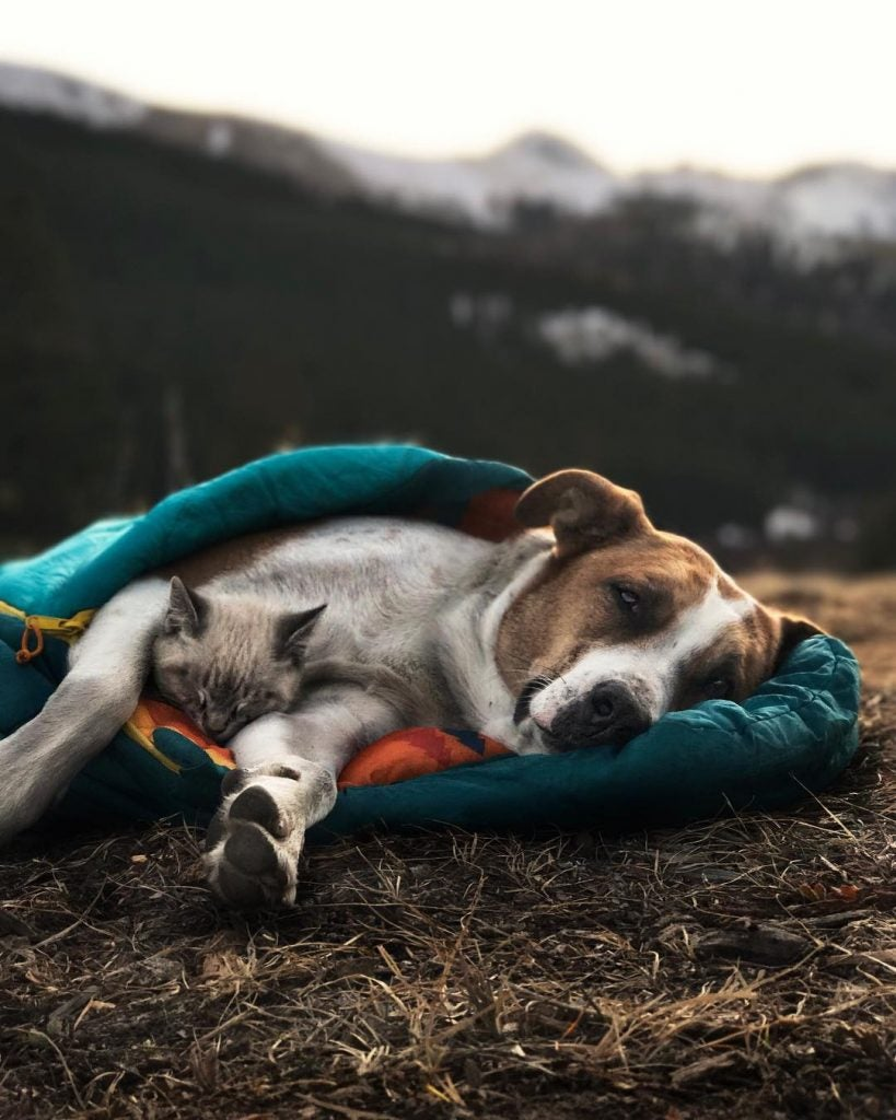 pet friendly camping stories