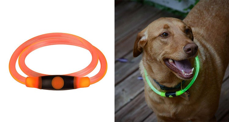 Camping gear for dogs: Nighthowl LED collar