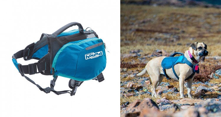Camping gear for dogs: Outward Hound daypack