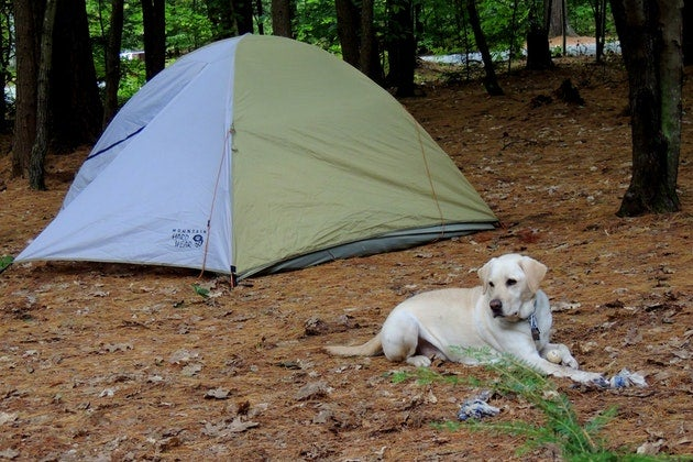 Camping with dogs in quechee park