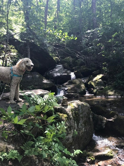 Camping with dogs in red oak