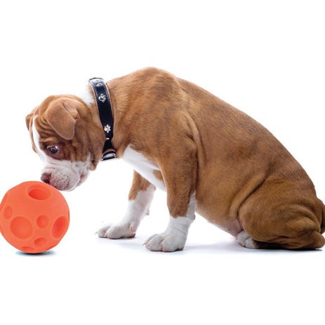 Camping gear for dogs: the Tricky Treat Ball
