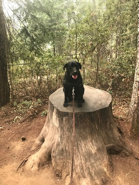 Camping with dogs in union creek