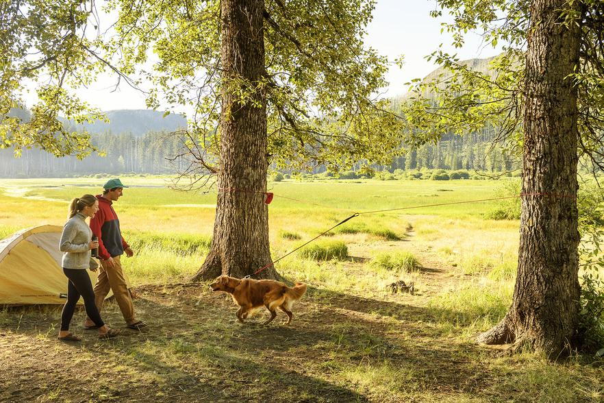 Camping with dogs: be sure to follow the leash law!