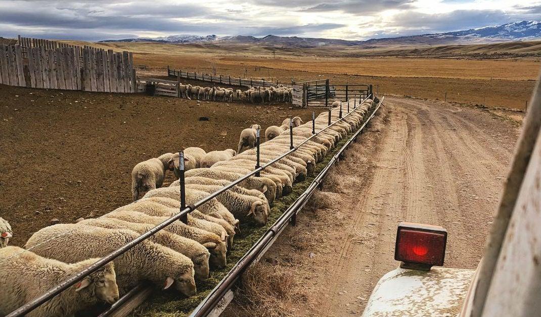 Duckworth merino wool