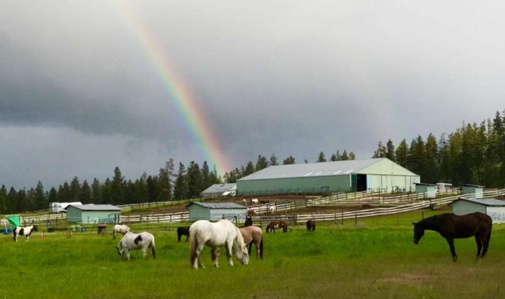 a rainbow lands on a horse farm in washington