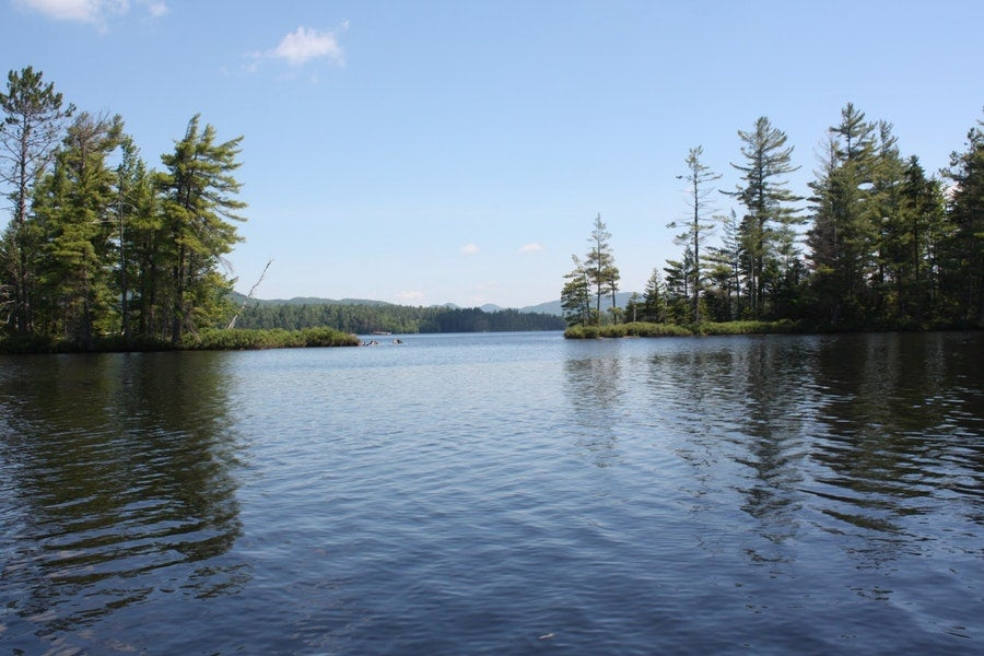 Dog-friendly campgrounds: Buck Pond