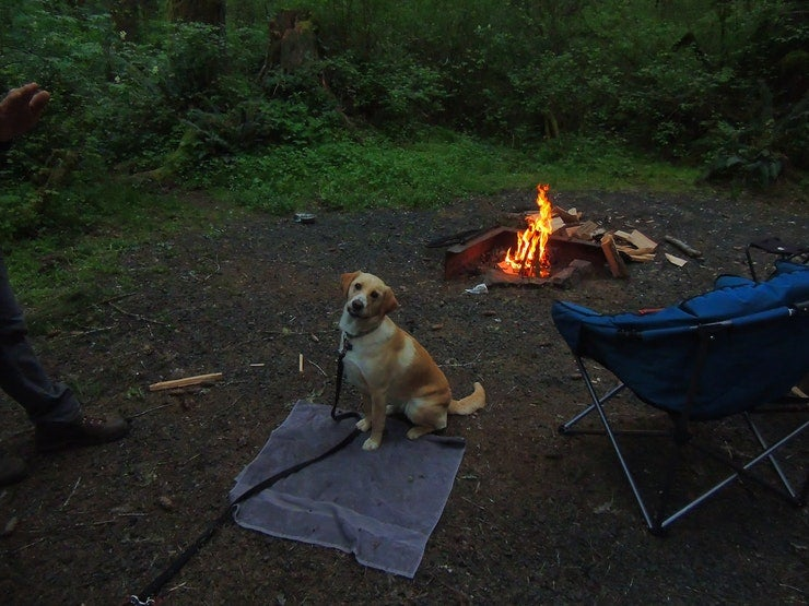 dog in front of finished campfire
