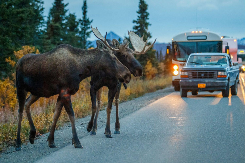 Denali park road permits