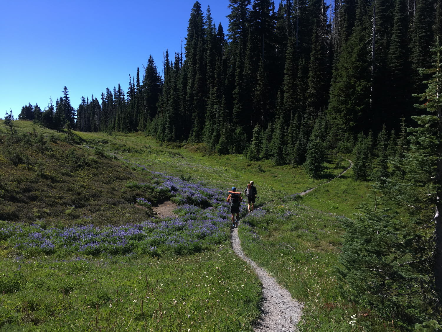 wildflowers and hikers along trail