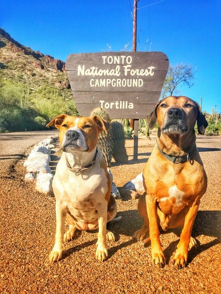 Hiking with dogs in the hot desert can be dangerous so bring lots of water.