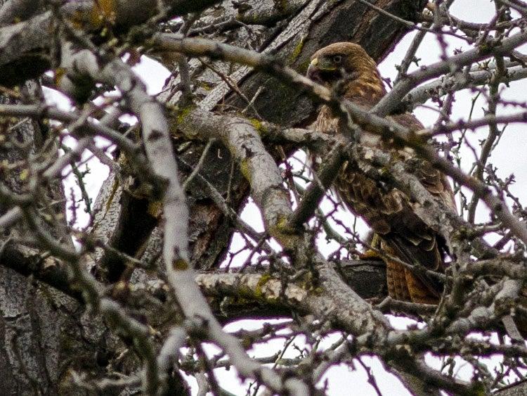 cove palisades state park eagle oregon