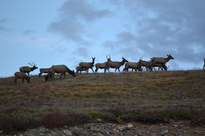 wildlife viewing herd