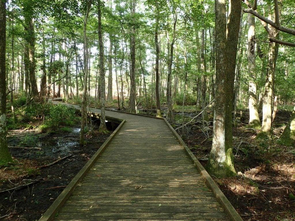 carolina beach state park trails