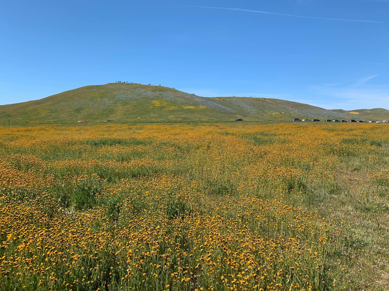 wildflowers over grassland