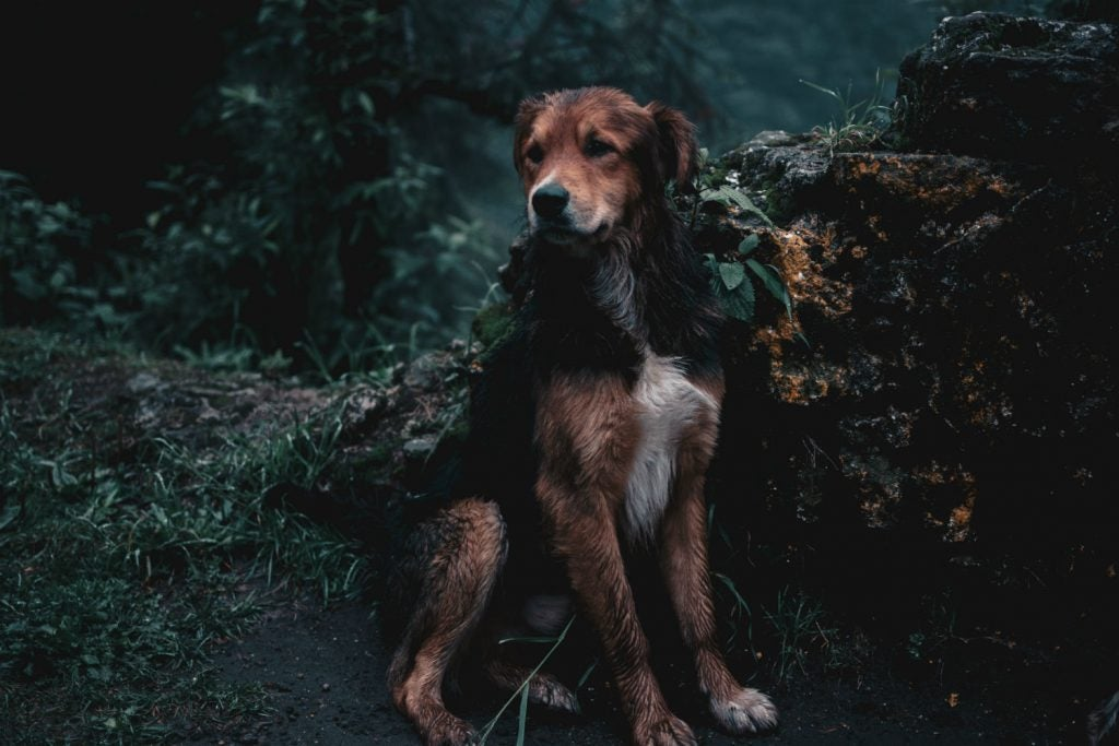 Be aware of the possibility that you might encounter other pets when hiking with dogs.
