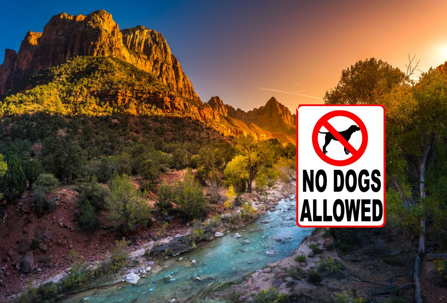 Dog Friendly Parks In Illinois