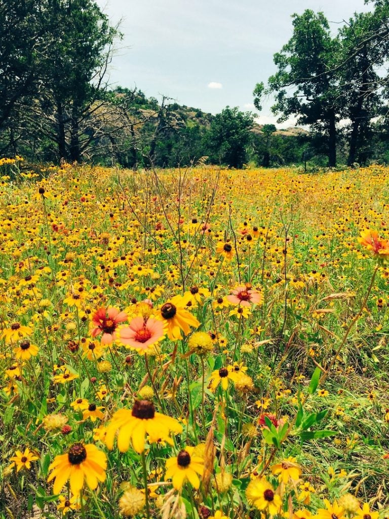 wildflowers and where to camp nearby