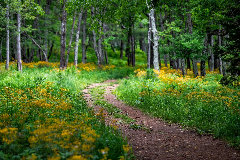 flowers on trail at shenandoah