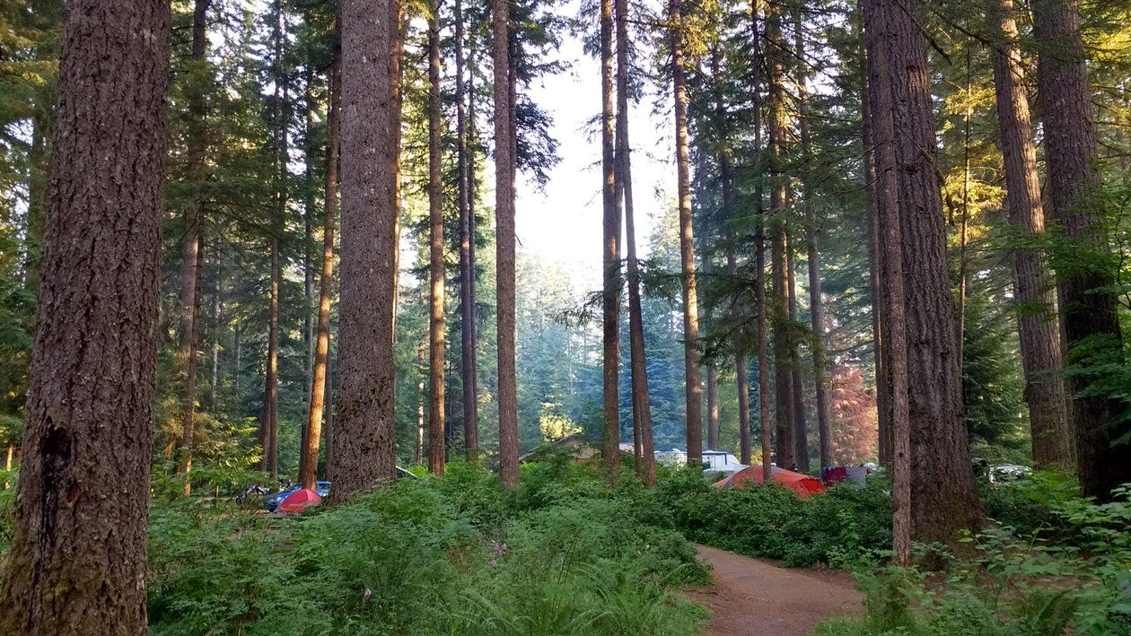 Silver Falls State Park camping