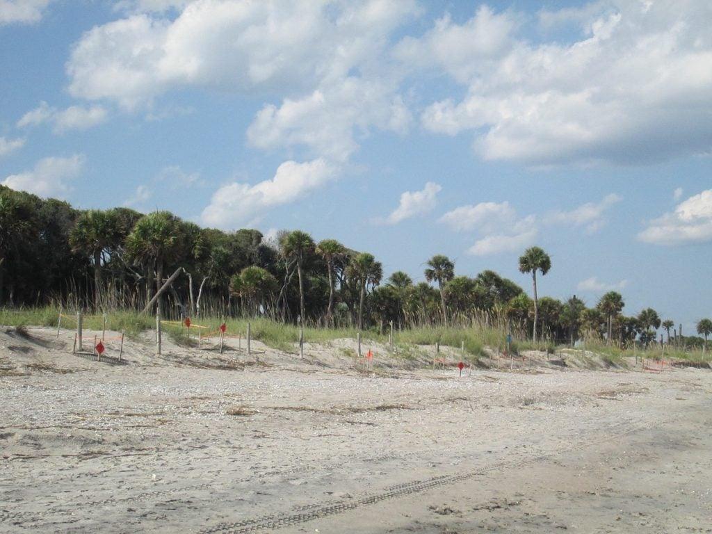 Edisto Beach State Park shoreline