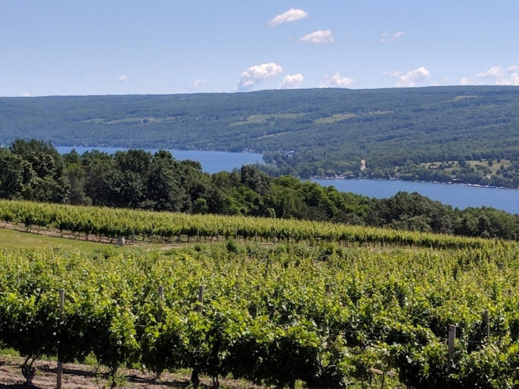 New York State Finger Lakes wineries
