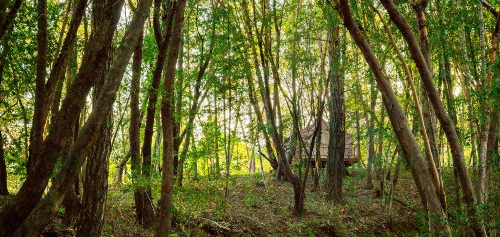 shelterwood glamping in sonoma county wine country california