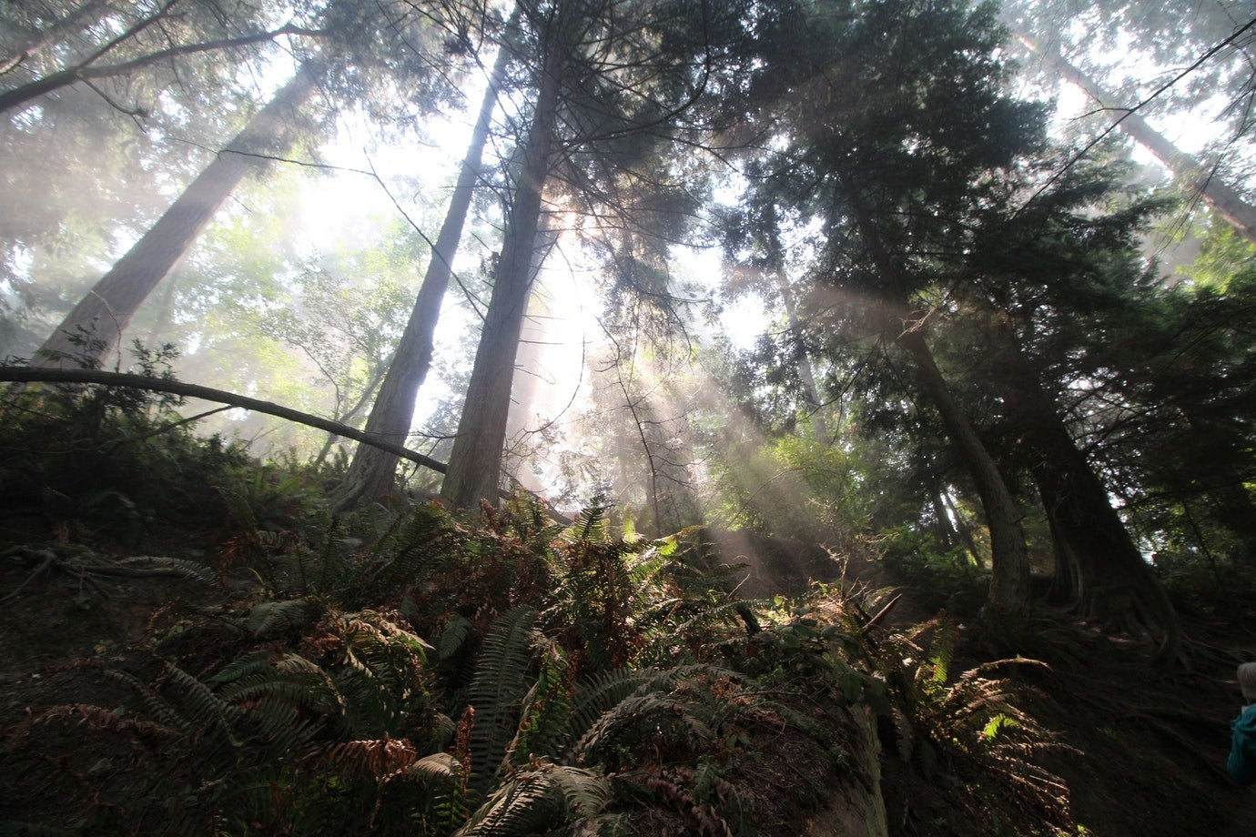 sun rays through thick trees in deception pass state park