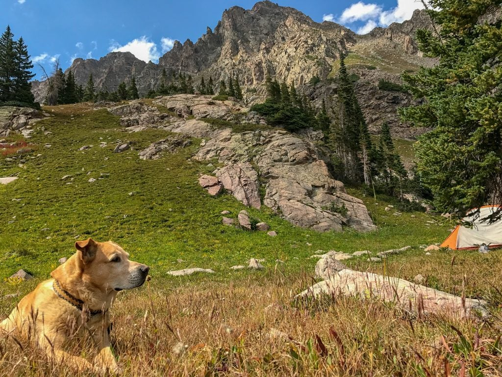 happy dog resting in a field thanks to backpacking tips