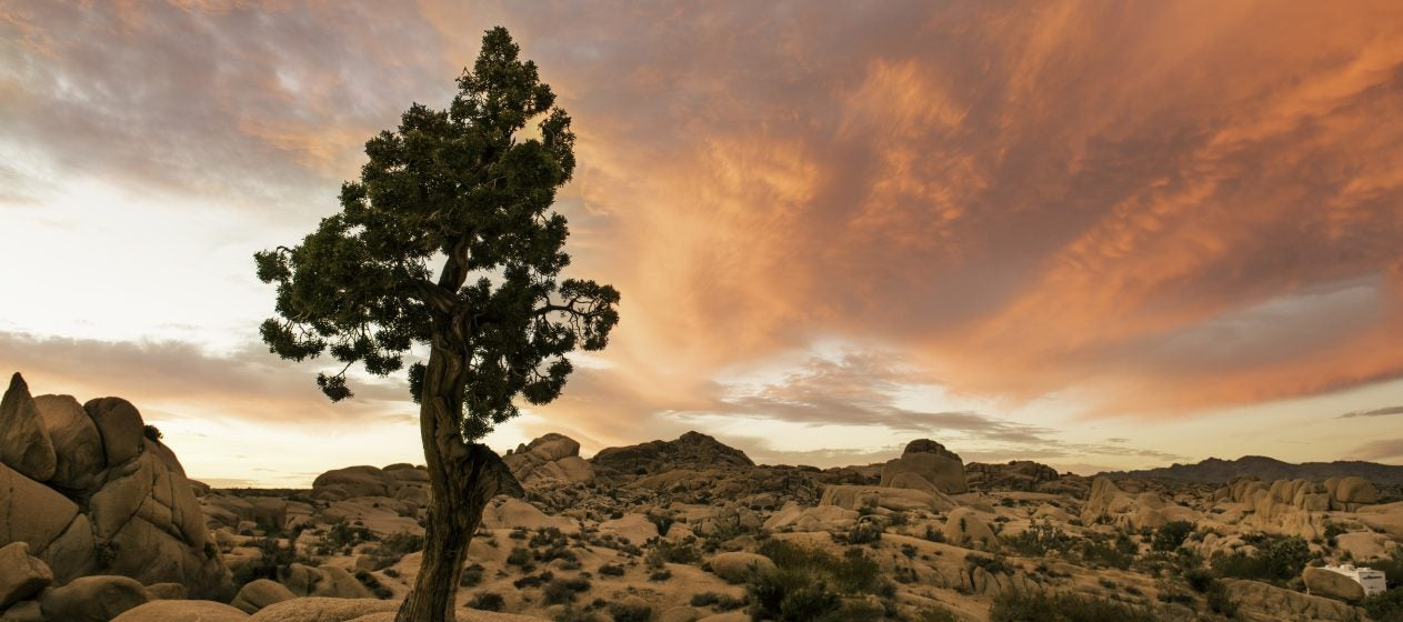 Recklessly: Firewood For Sale Joshua Tree