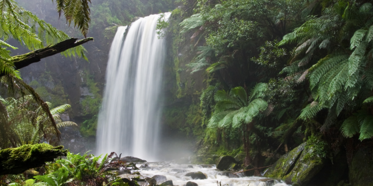 rainforest camping destinations