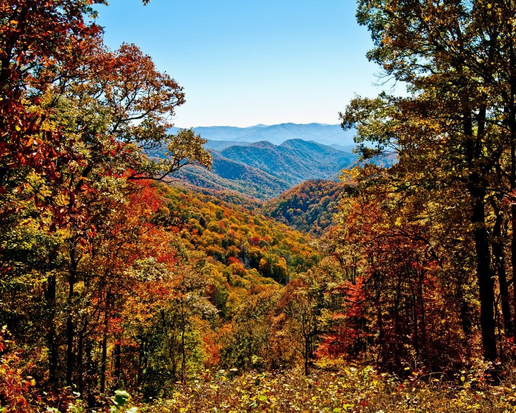 autumn woods in the great smoky mountains
