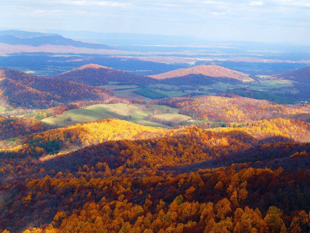 autumn woods in shenandoah