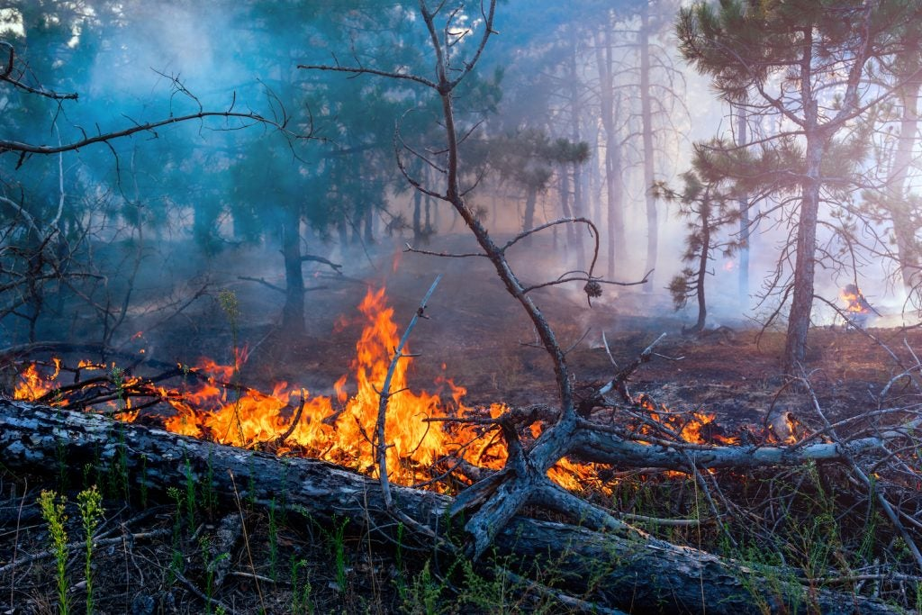 forest fires and prevention tips for campers