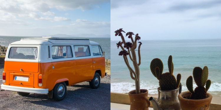 vanlife plants