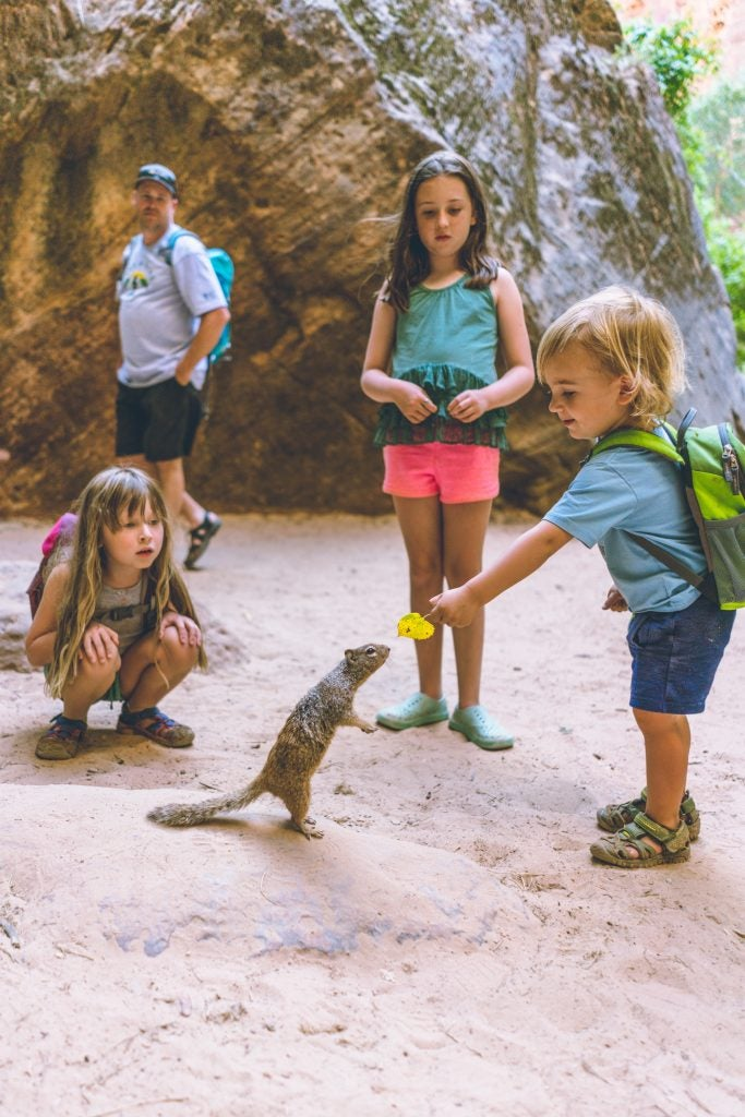 young boy holds leaf out to curious squirrel as sisters and dad looks on, via hike it baby