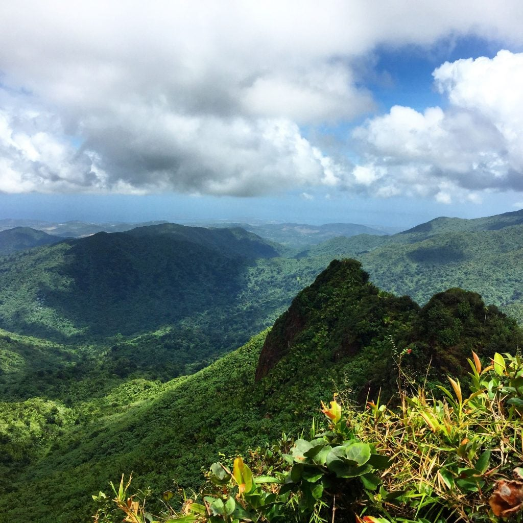 panoramic view of El Yunque National Forest where mythical beasts live