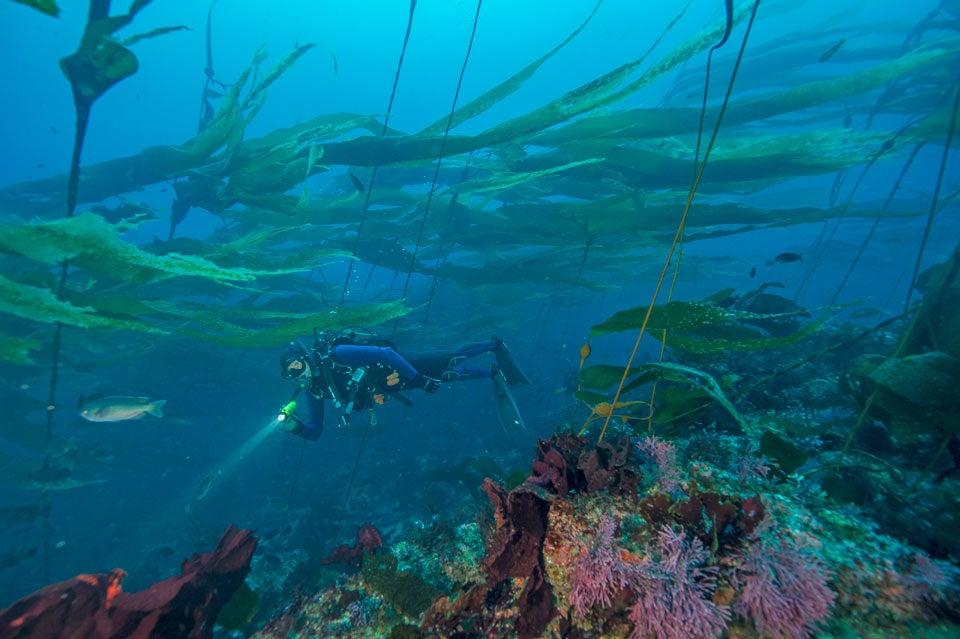 channel islands - scuba diving