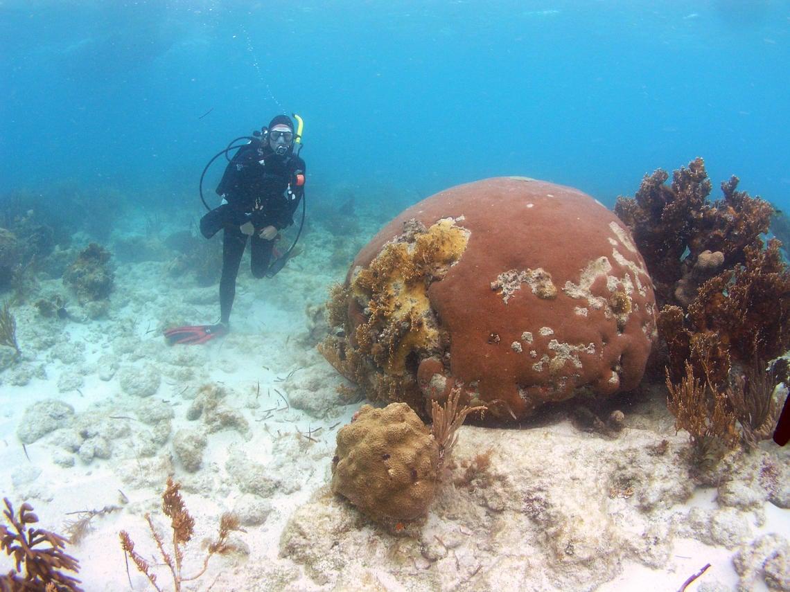 dry tortugas - scuba diving
