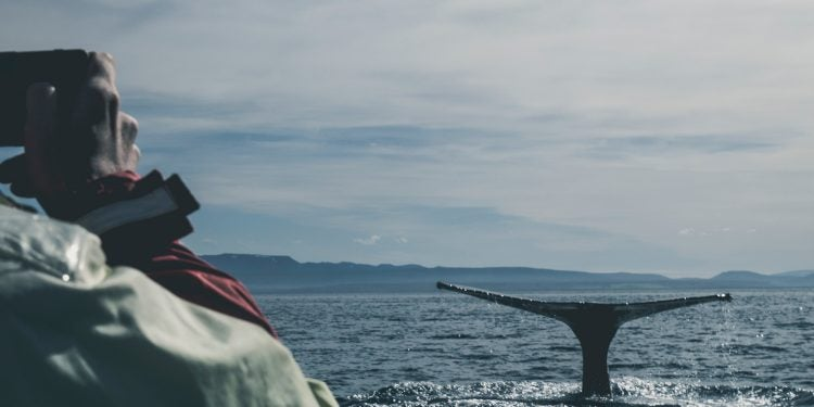 Gray whale watching in Oregon